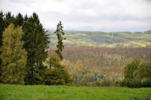 Massif forestier ardennais