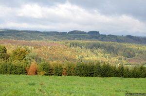 Het woud van Saint-Hubert